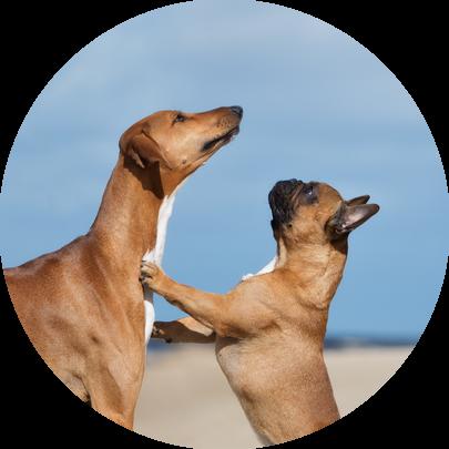 spelgedrag honden