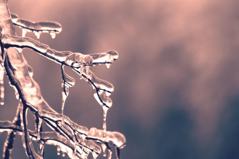 Bevroren takken in winterse omgeving