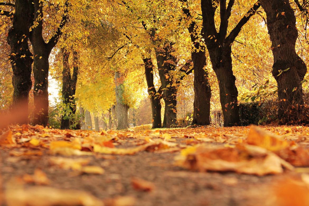 bosrijk herfstlandschap met vallende blaadjes van de bomen