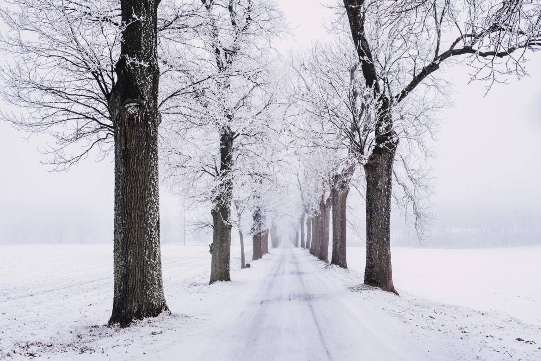 winterlandschap met bomen en sneeuw