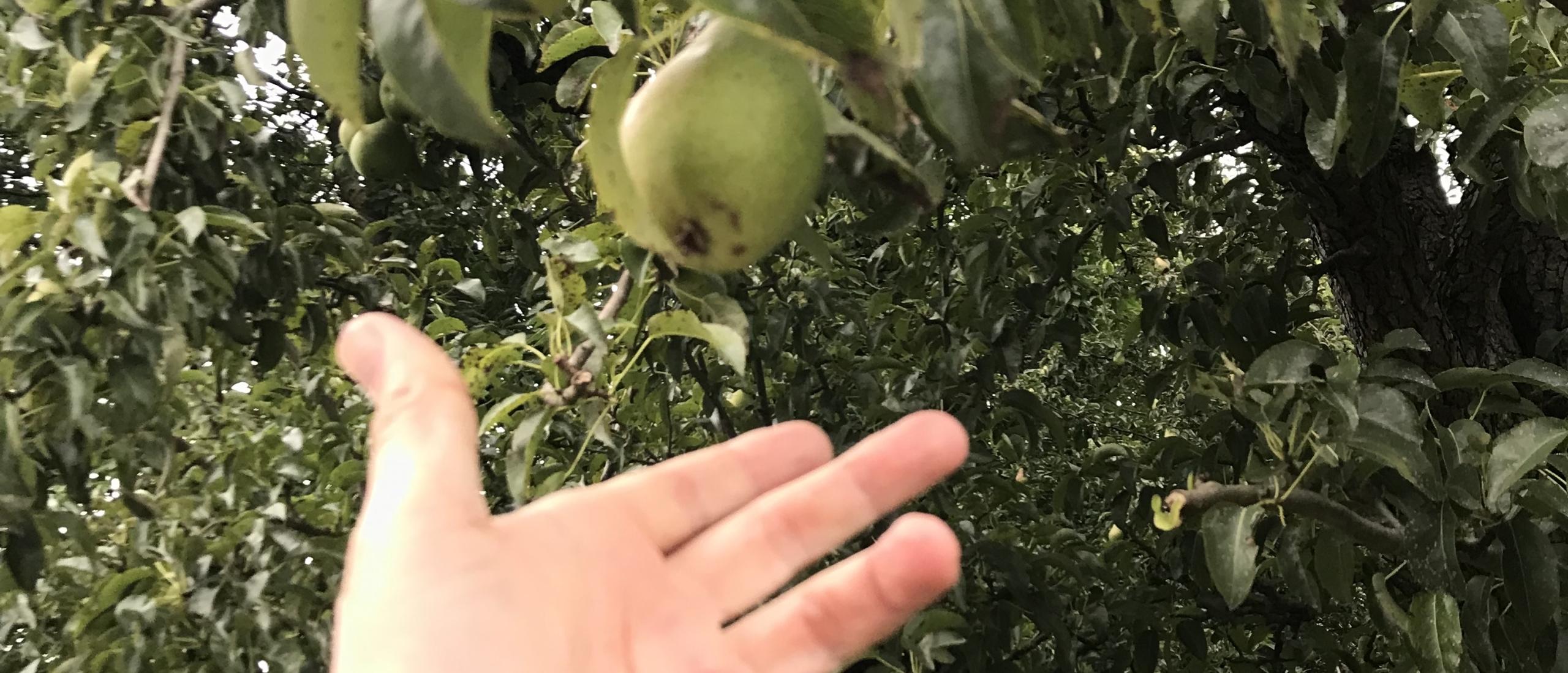Pluk het laag hangende fruit