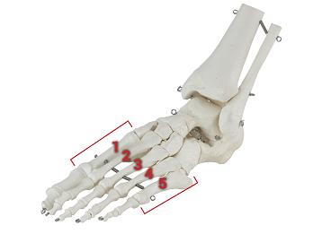 Wat zijn gezonde voeten