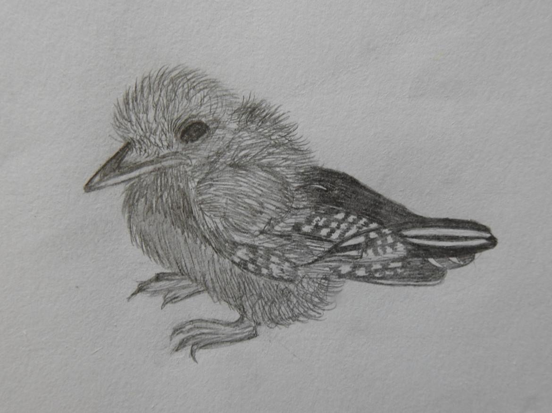 Gaai tekening