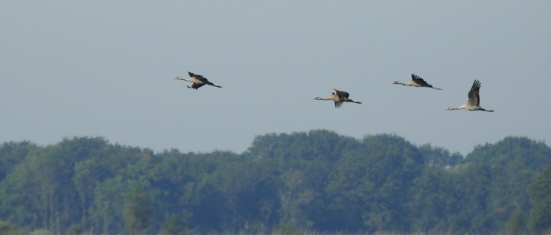 3 dingen die je móet weten over de vogeltrek