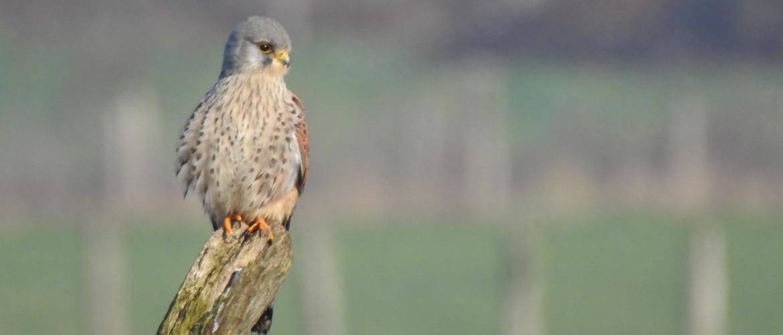 7 dingen die je nog niet wist over 6 prachtige vogels
