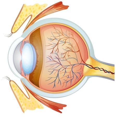 Te hoge spanning oogspieren