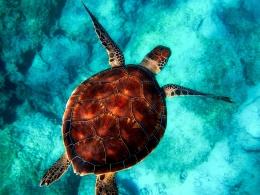 duiken-op-tenerife
