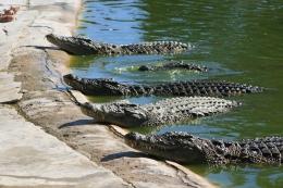 krokodillen-tenerife