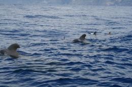 tenerife-walvissen