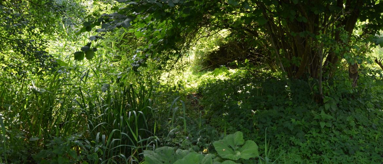 Eetbare wilde planten in de permacultuur tuin