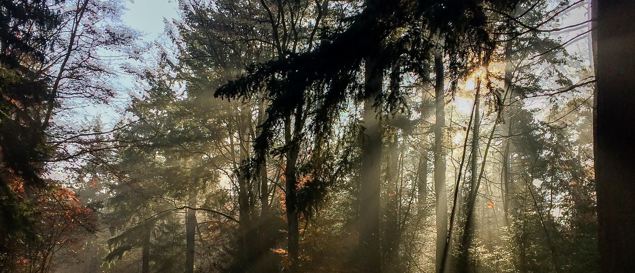 Naar binnen keren tijdens de herfst - Wildplukverhaal