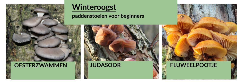 eetbare paddenstoelen in de winter