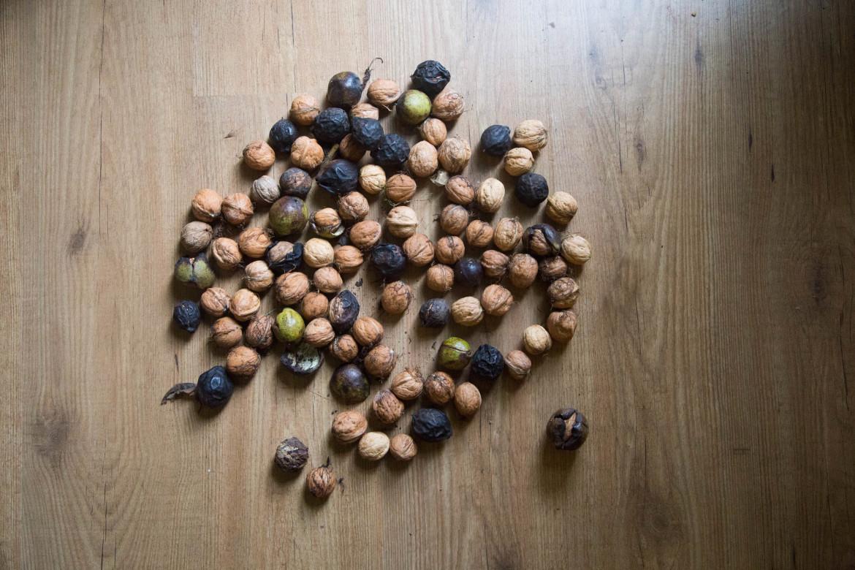 wildplukken-in-de-herfst-noten-walnoten