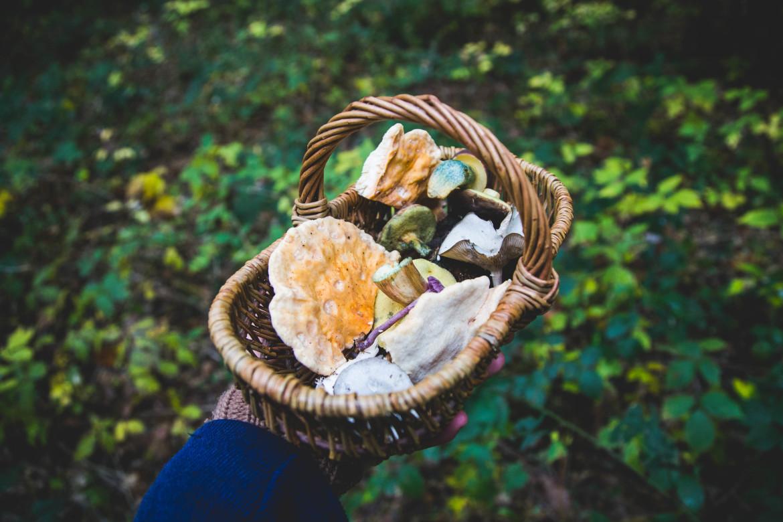 wildplukken in de herfst - paddenstoelen