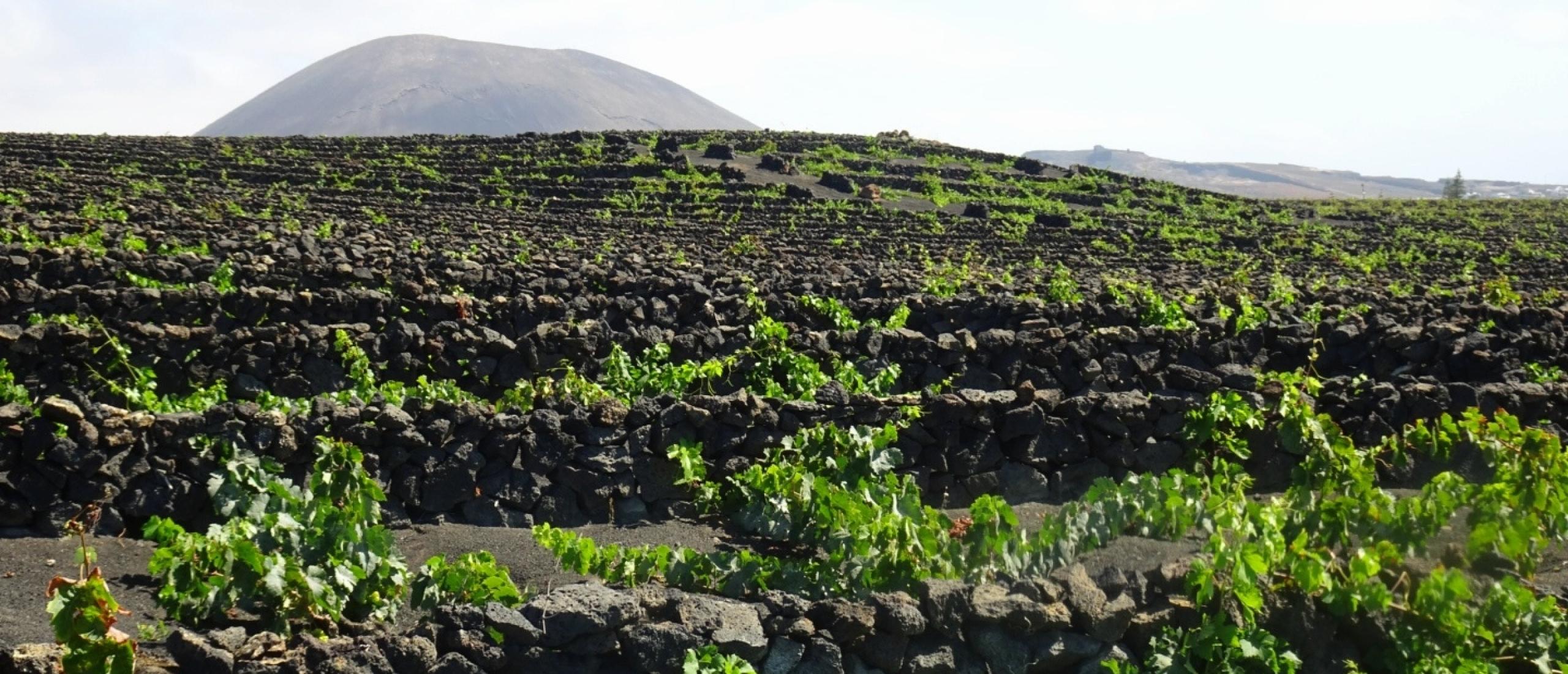La Geria, uniek wijngebied op Lanzarote