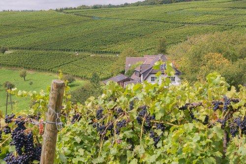 Rotweinwanderweg wandelroute wijnreis