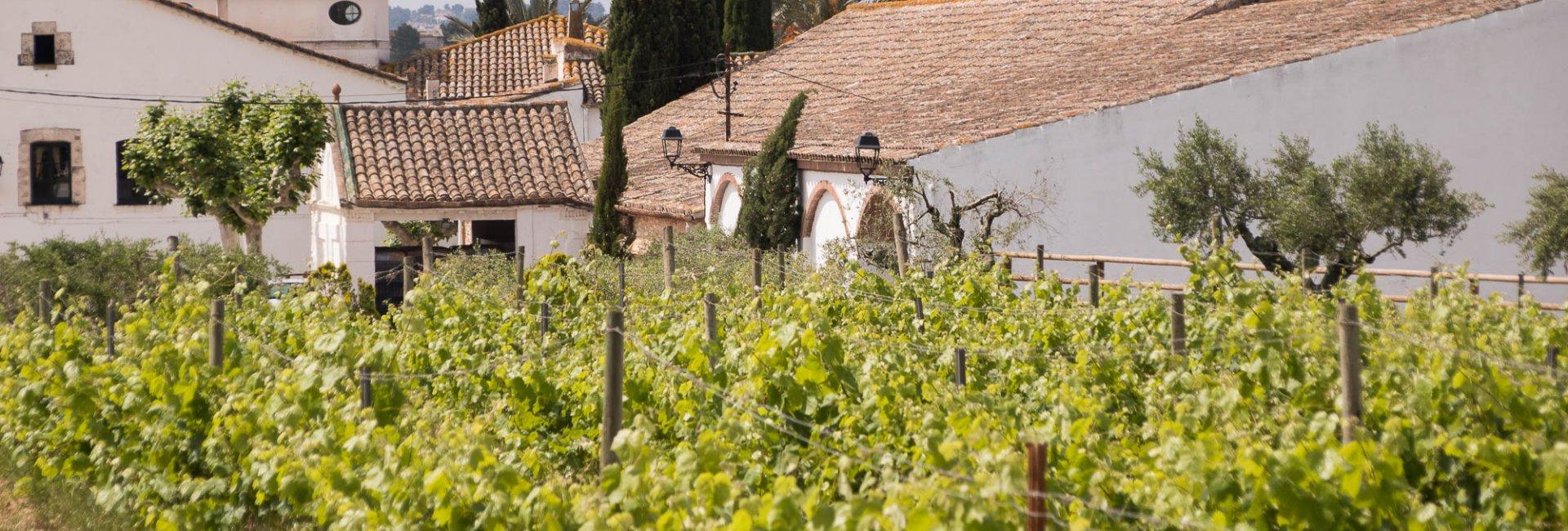 Wijnreizen spanje