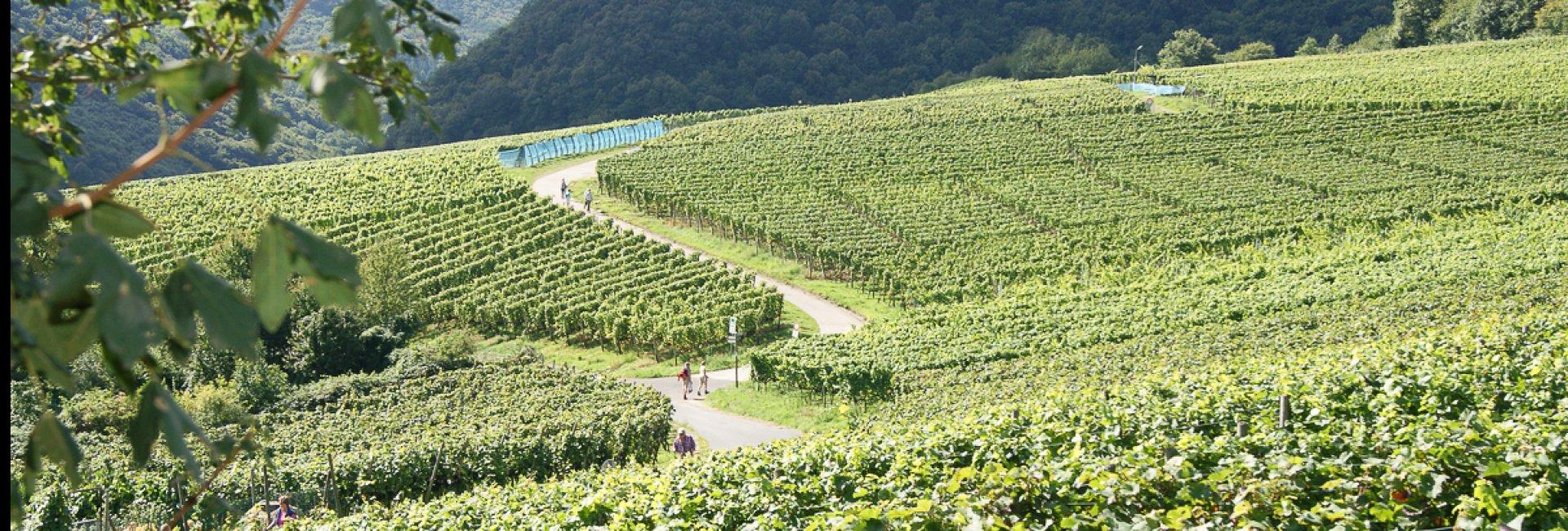 Ahrdal wijngebied