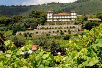 Wijn- en gastronomische reizen