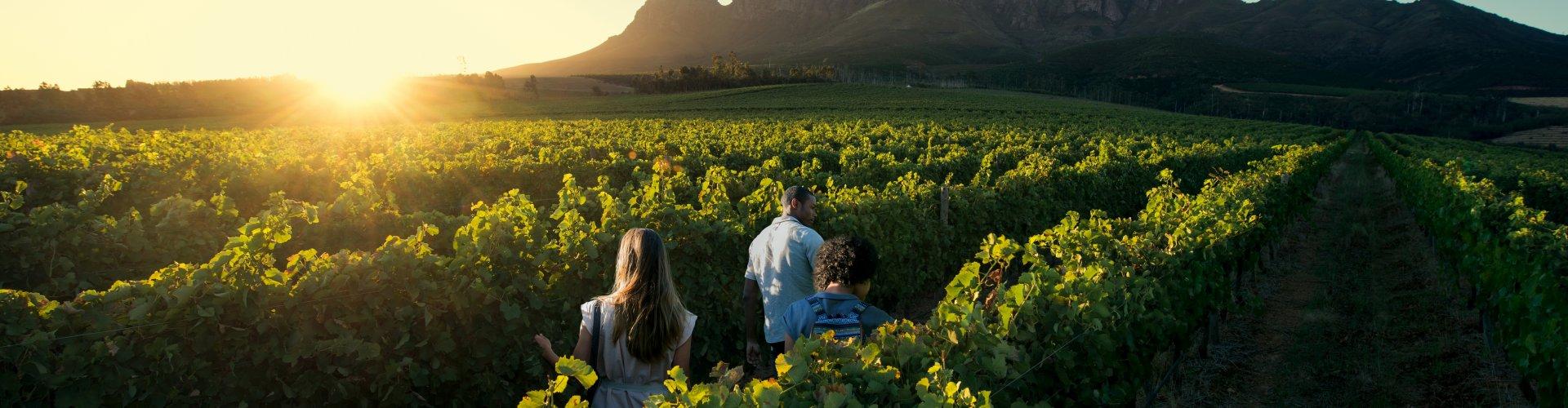 Wijnautoreis Zuid-Afrika