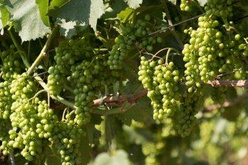 Wijnreizen op maat