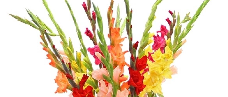 De dood of de gladiolen – Winnen of verliezen.