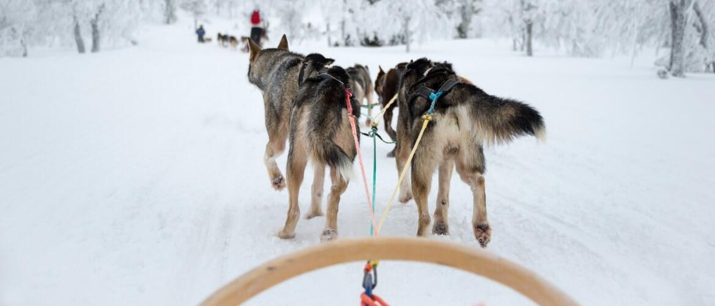 Wat is de beste reistijd voor Lapland?
