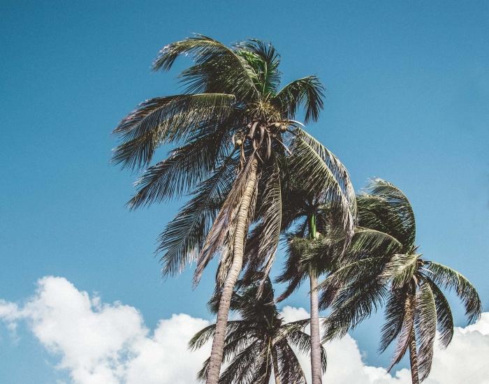 Alles over Curaçao