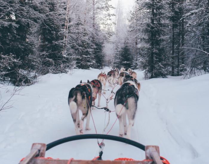 Van Zweeds Lapland genieten tijdens een sleehondentocht