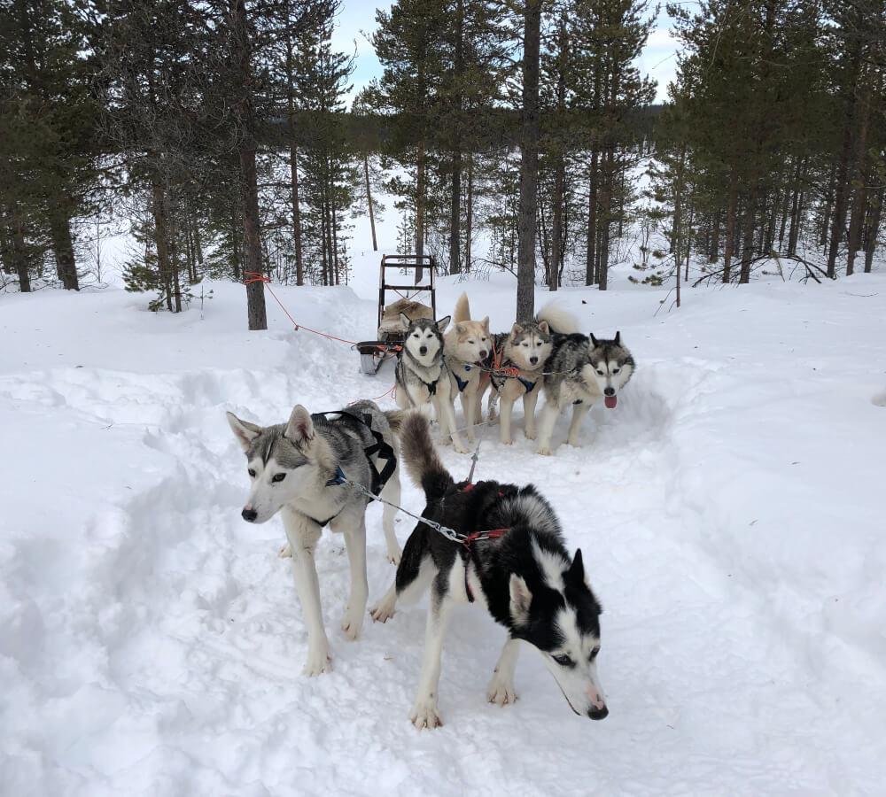 Wat te doen in Lapland?
