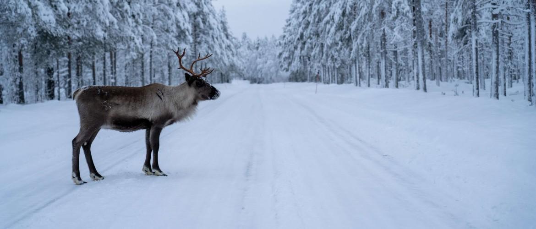 Waar ligt Lapland en wat is het verschil met Zweeds- en Fins Lapland?