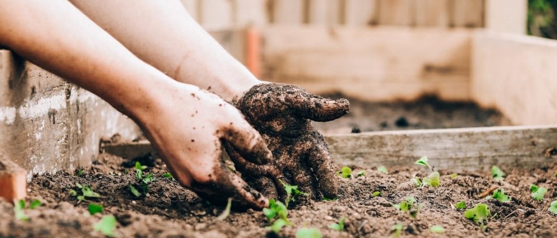 Tuinieren Vermindert Stress, Goed Voor Lichaam én Geest