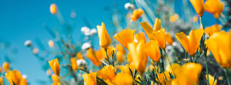 Begin de lente goed met deze 4 tips