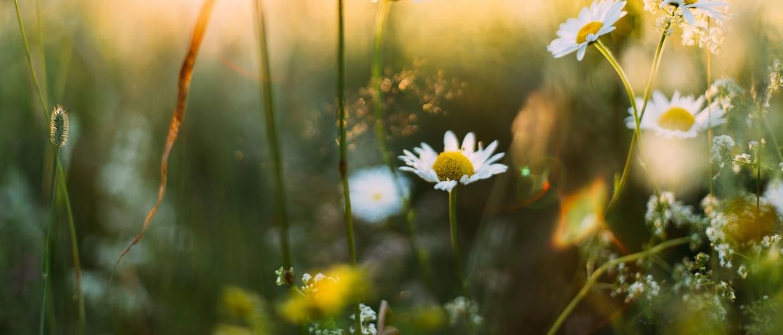 Mindfulness in de lente: 9 manieren om dit in de praktijk te brengen