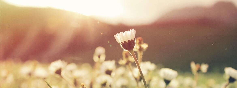 Mindfulness in de lente: 6 manieren om dit in de praktijk te brengen.
