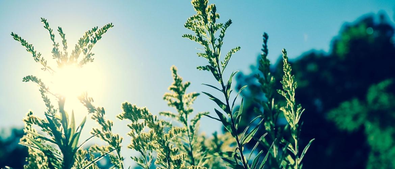 Mindful de zomer door: 5 mindfulness tips