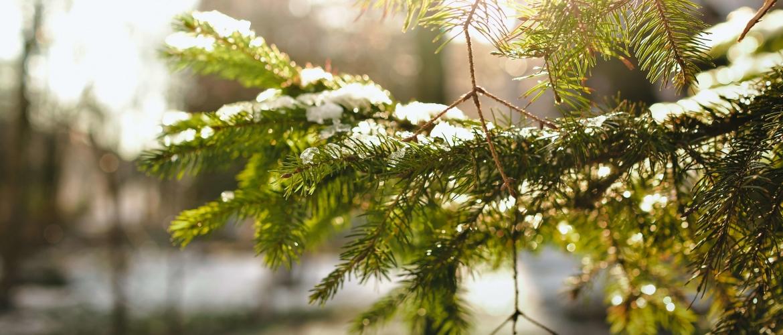 Kerststress voorkomen: 14 mindfulness tips voor de feestdagen!