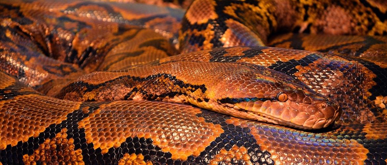 Angst voor dieren - Top 9 van dieren angsten