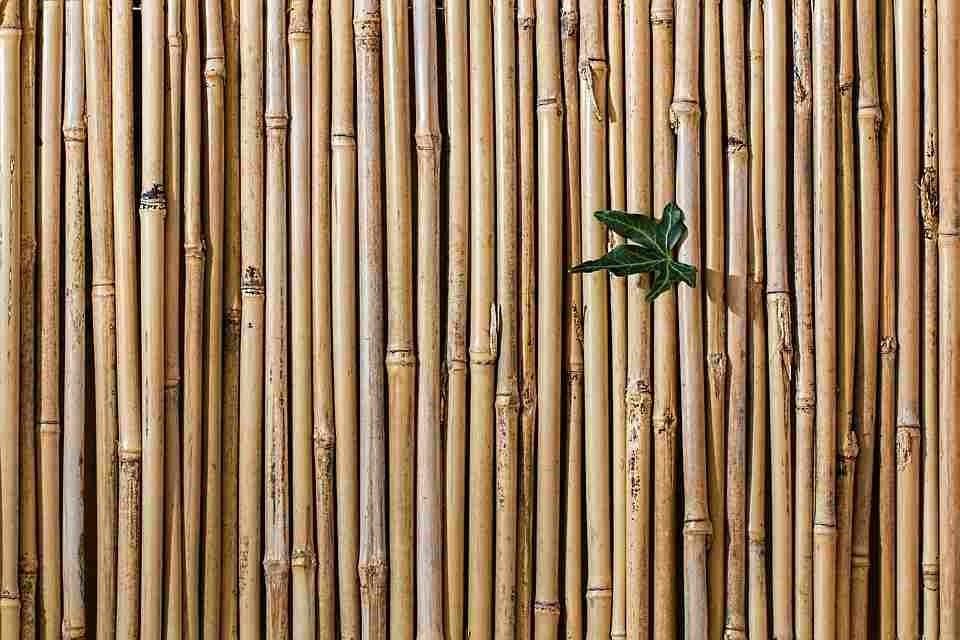 levensduur bamboe schutting