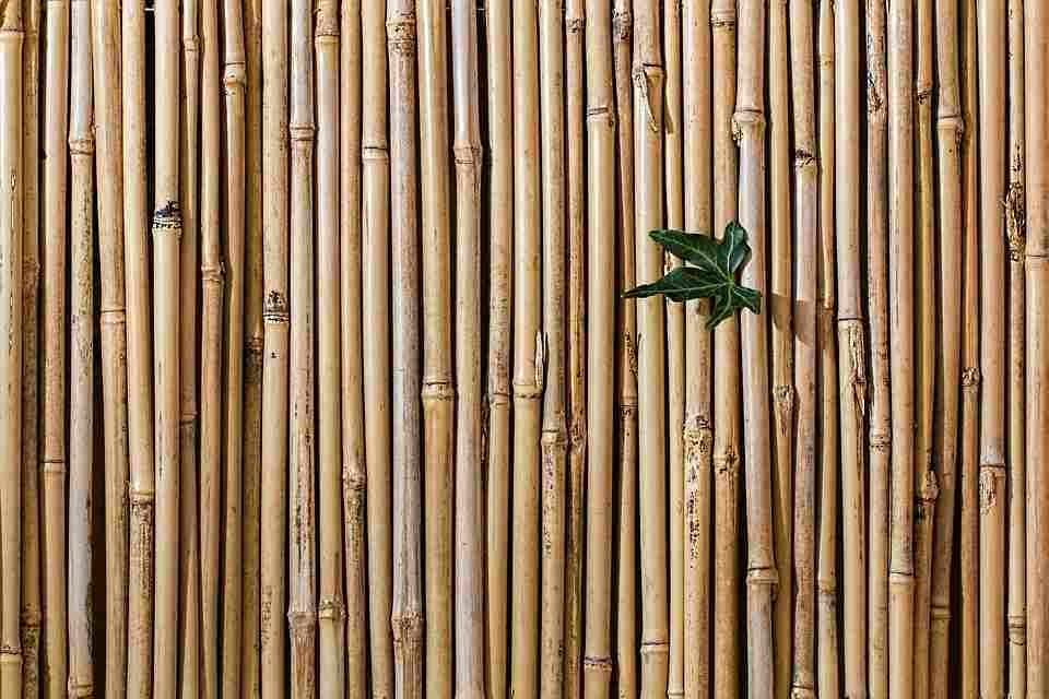soorten schutting bamboe