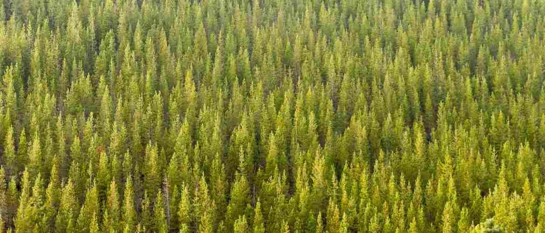 Wat is het verschil tussen larikshout en douglashout?